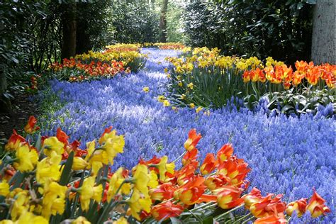 Colorful Keukenhof Gardens Holland World For Travel Flowers In The Garden Of