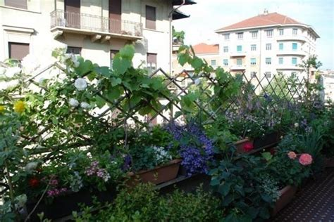 piante perenni da terrazzo ricanti da balcone piante appartamento
