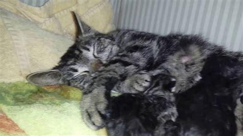 wann werden katzen geboren hier werden unsere babys geboren katzen kommen auf die