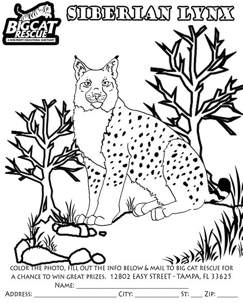 free coloring pages of siberian tiger