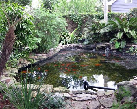backyard koi ponds backyard koi pond picture of lions inn bed breakfast