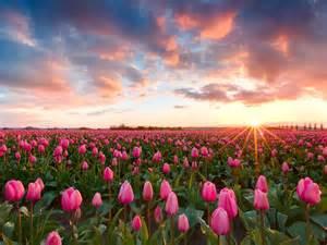 imagenes flores de jardin fondo de jardin wallpapers gratis imagenes paisajes