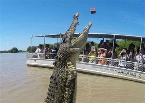 crocodile boat tours darwin jumping crocodile tours crocodile cruise rydges