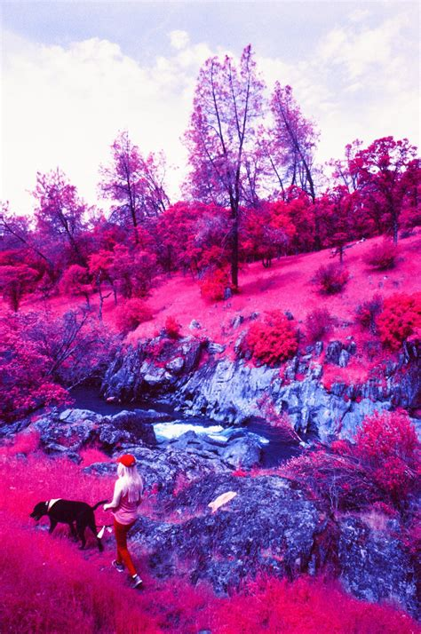 infrared color infrared photography direct sunlight across the whole