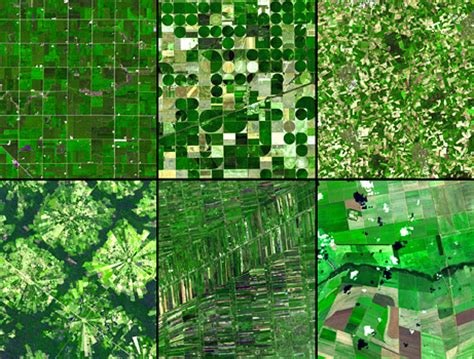 pattern of agriculture and types of forest in bangladesh happy mayday