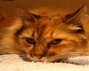 cat pictures 1280x1024
