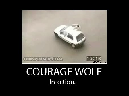 Courage Memes - courage wolf best of b