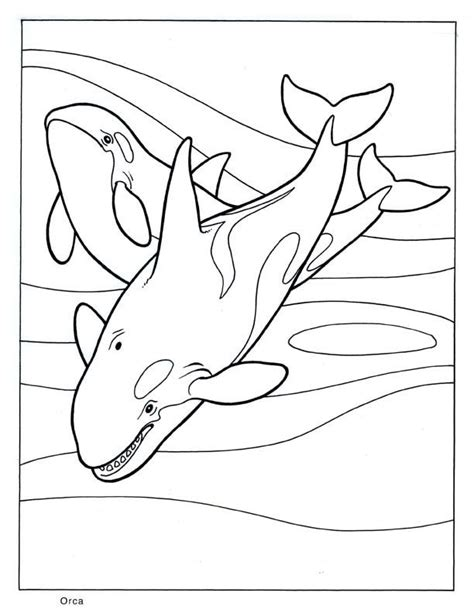 killer whale coloring pages coloring home