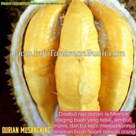 Jual Bibit Itik Raja bibit durian musangking si raja durian dengan aroma dan