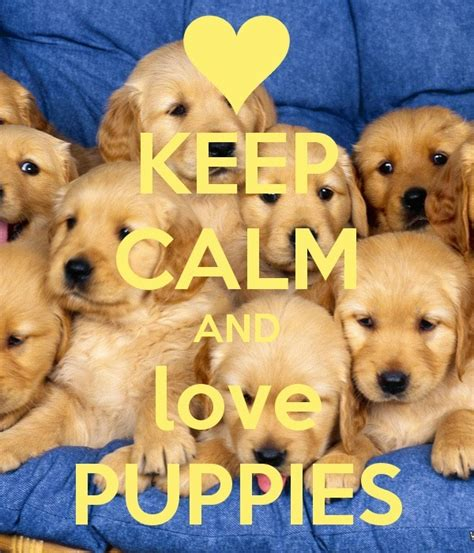puppies pics keep calm and puppies 555 by katara36 on deviantart