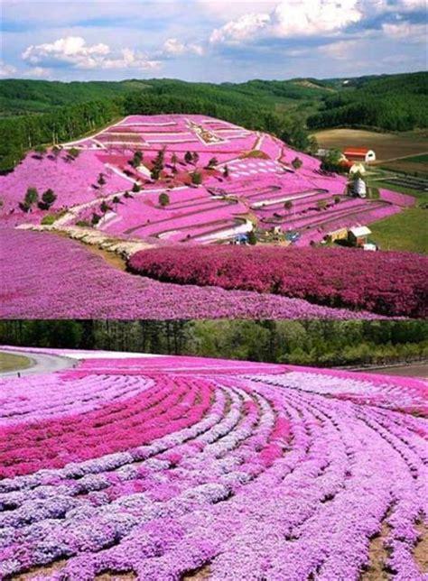 flower garden japan cerisiers du japon quand la nature devient