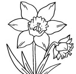 Daffodil Flower Outline by Daffodil Outline Cliparts Co