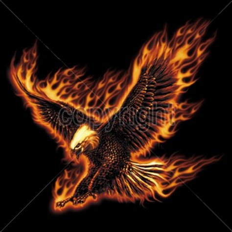 photo collection the burning eagle
