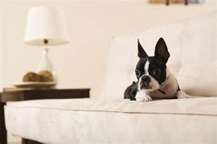 couch stay top 2 couch upholstery choices for cat and dog owners