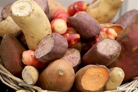 wann sind kartoffeln gar kartoffeln ernten wann ist die beste zeit zur