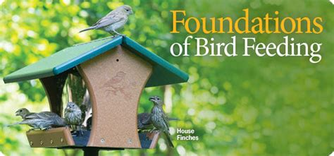 wild birds unlimited discover a refuge in your own