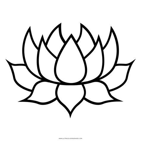 fiore di loto disegno fiore di loto disegno home visualizza idee immagine