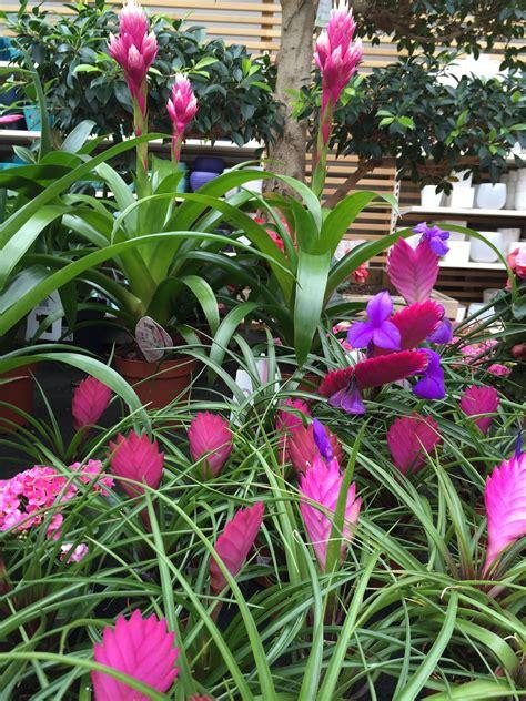 Holen Sie sich den Frühling mit Topf Pflanzen rein