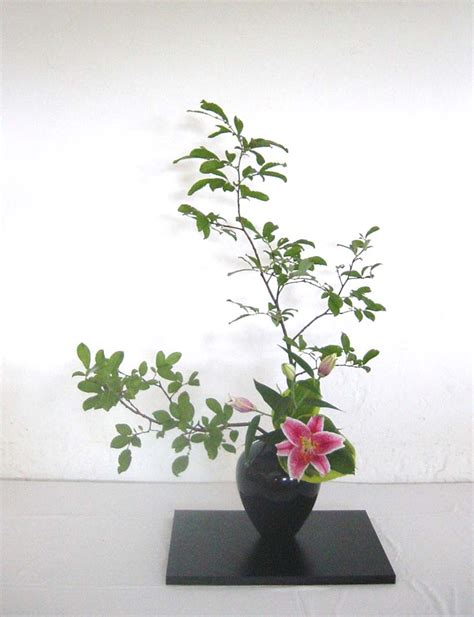 ikebana fiori tadacip 20 uk pill store