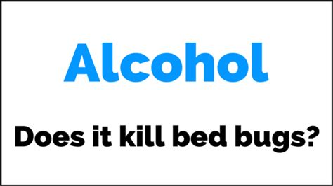 do rubbing alcohol kill bed bugs does rubbing alcohol kill bed bugs everything you want to