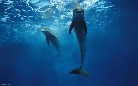 The Dolphin the blue sea and a dolphin kalili mystic sea