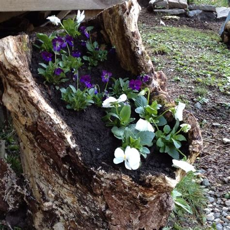 hollow log flower planter just one of mother natures gifts hollow log planter gardening