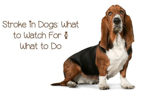 strokes in dogs signs and symptoms of stroke in dogs