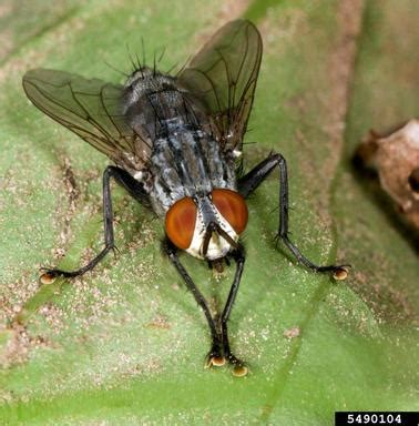 why are there so many flies in my house shoo fly don t bother me the epa blog