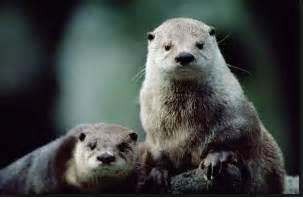 hewan terbesar  dunia   ditemukan dosenbiologicom