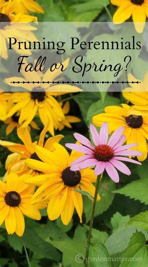 anna s perennials fall flowering perennials pruning perennials fall or spring gardens spring and