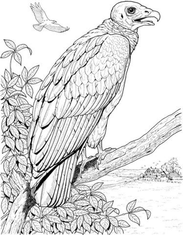 king vulture coloring page perched turkey vulture coloring page free printable