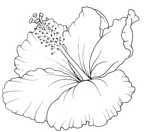hibiscus flower drawing step by step hibiscus flower