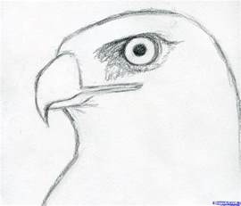 how to draw a hawk how to draw a hawk tailed hawk step 4