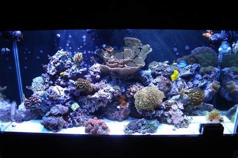 aquascape ideas reef bruin blog