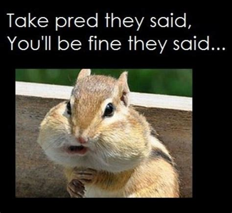 Chipmunk Meme - everyone used to comment on my quot adorable chipmunk cheeks
