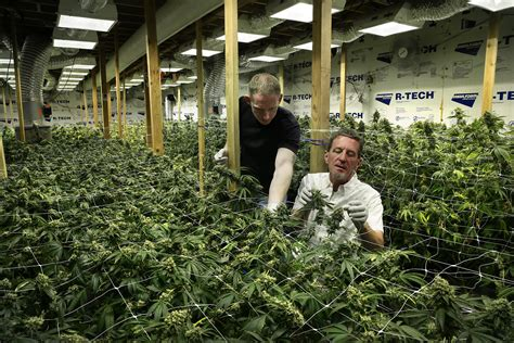 growers house warehouse or pot grow house neighbors can t tell san francisco chronicle
