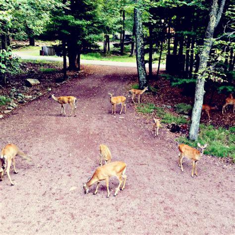 Keeping Deer Out Of Garden by Deer Gracious Me Nature S Guide To Keeping Deer Out Of Your Garden