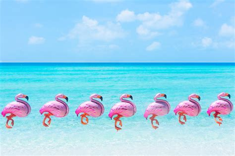 pink flamingos decor inspiration gray malin gray malin