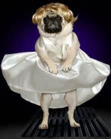 Nacho Libre Halloween Costumes 20 Poor Pugs Movie Costumes Screen Junkies