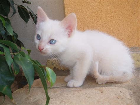 imagenes en blanco de gatos curiosidades blog mascotas kyra