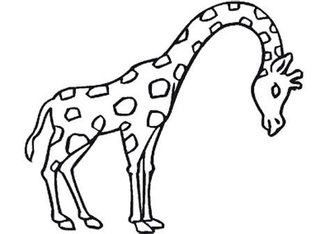 imagenes de jirafas en ingles la chachipedia jirafas para colorear dibujos coloreados