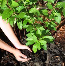 Pupuk Calsium Fertilizer facts regarding organic fertilizers flowers magazine