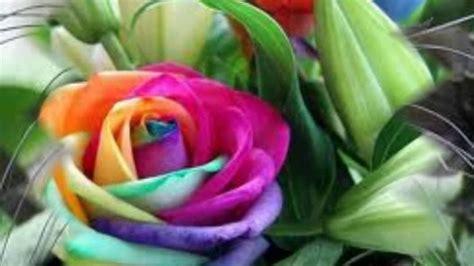 imagenes de las flores mas lindas del mundo imagenes de las 10 flores mas raras del mundo youtube