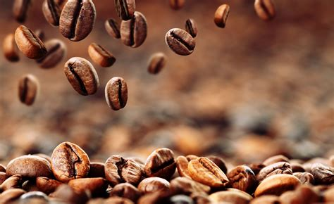 Coffee Di Coffee Bean coffee plant clipart coffee grounds pencil and in color