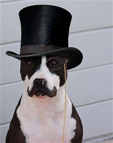 puppy with mustache with mustache and top hat