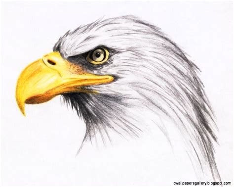 eagles colors eagles drawings color