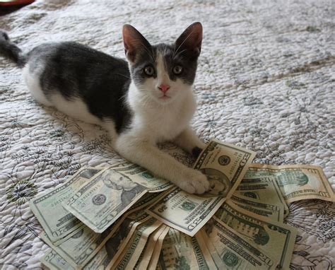 I A Cat by Spent 19 000 For Cat S Kidney Transplant And Then