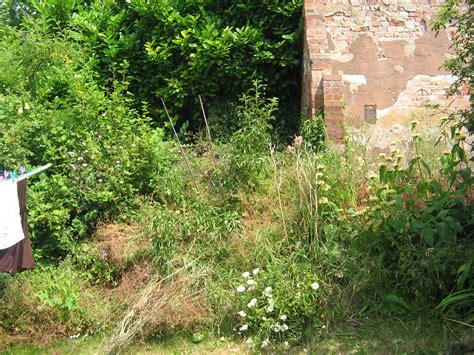 overgrown garden back in blighty week 1 the 1940 s experiment