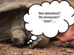 letargo tartarughe terrestri giardino il letargo delle tartarughe terrestri giardino felice it