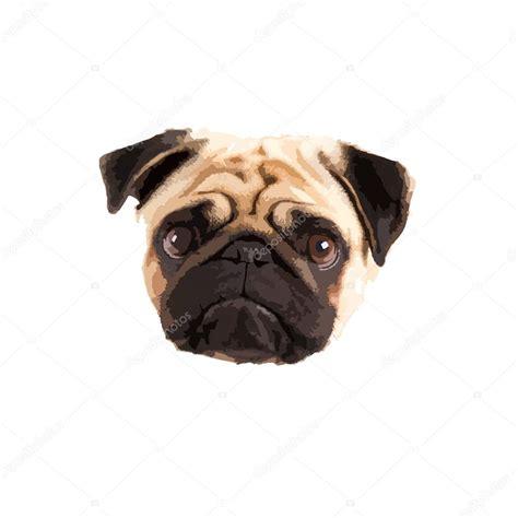 pugs faces pug vector stock vector 169 nathan0834 62638861